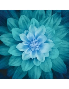 Teal Dream Big Flower 43in x 43in cotton fabric panel