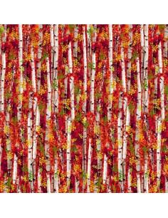 Multi Fall Birch Trees...